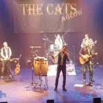 The Cats Aglow in de Klink
