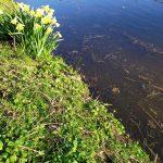Twijfel aan kwaliteit vijverwater Oldeferdpark